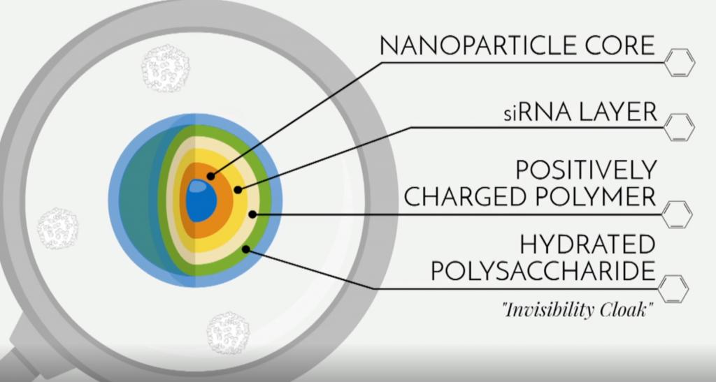 1 pav. Molekulės struktūra